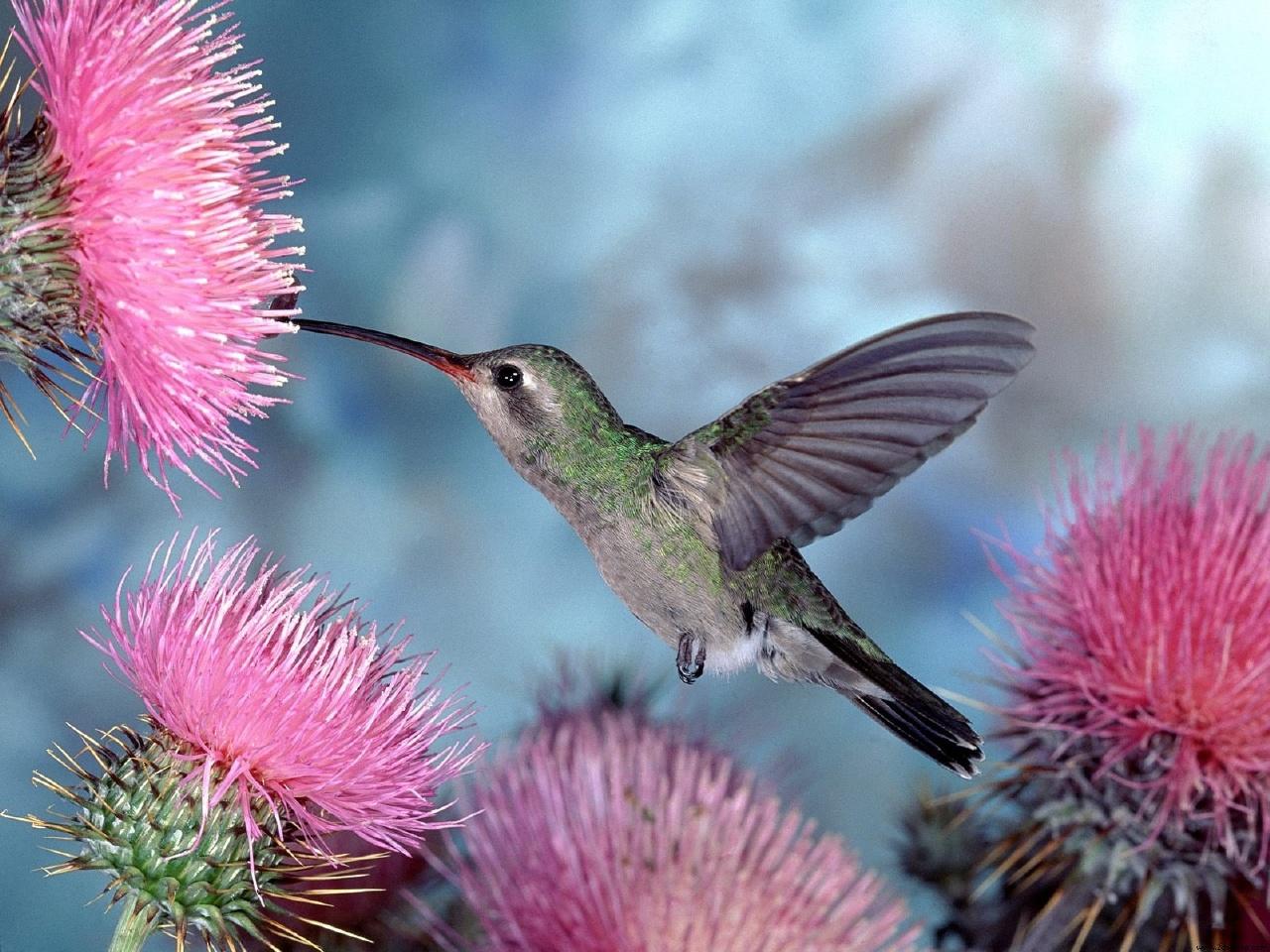 O Beija-folor beija a flor por interesse no néctar, eu mando um beijo para todas as mães, só por amor!