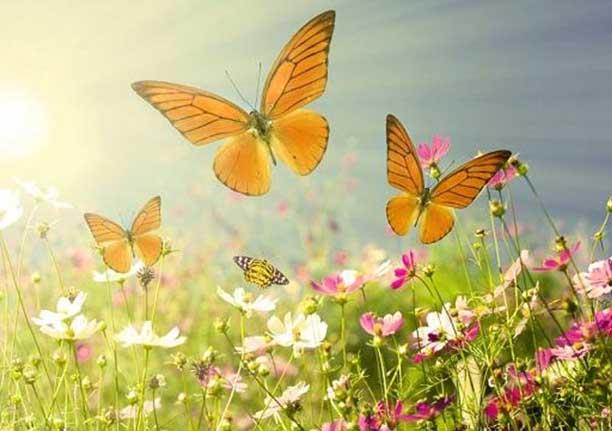 Você não precisa correr atrás de borboletas, seja um jardim florido e elas correrão atrás de você. Ver mais...