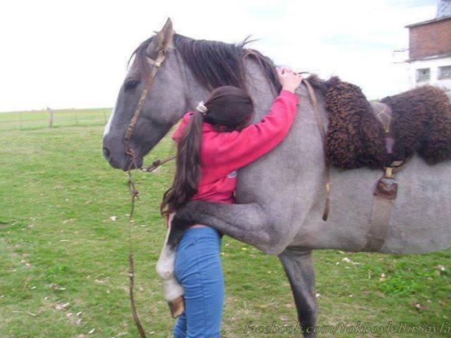 Até cavalo dá abraço. Veja mais sobre abraços...