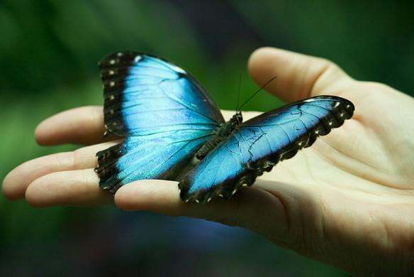 O segredo não é correr atrás das borboletas, e sim, fazer com que elas corram atrás de nós. Veja mais...