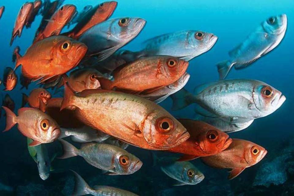 Pescadores experientes, lançaram a rede ao mar, pescaram a noite toda, e não pegou nada. Veja mais...