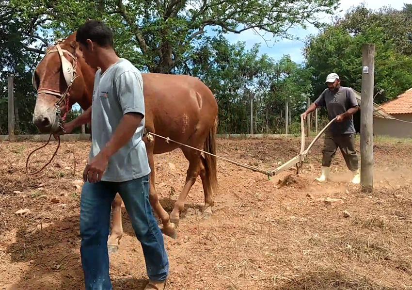Não sejais como o cavalo e o burro, que por falta de entendimento, precisam de uma corda na cabeça para lhes guiar. Ver mais...