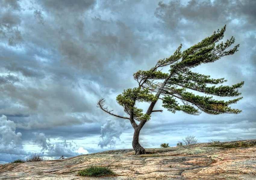 O vento não sopra na direção de quem não sabe pra onde vai, e que não sabe o que quer. Veja mais...